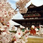 Why Choose Asia For Your Internship Abroad?